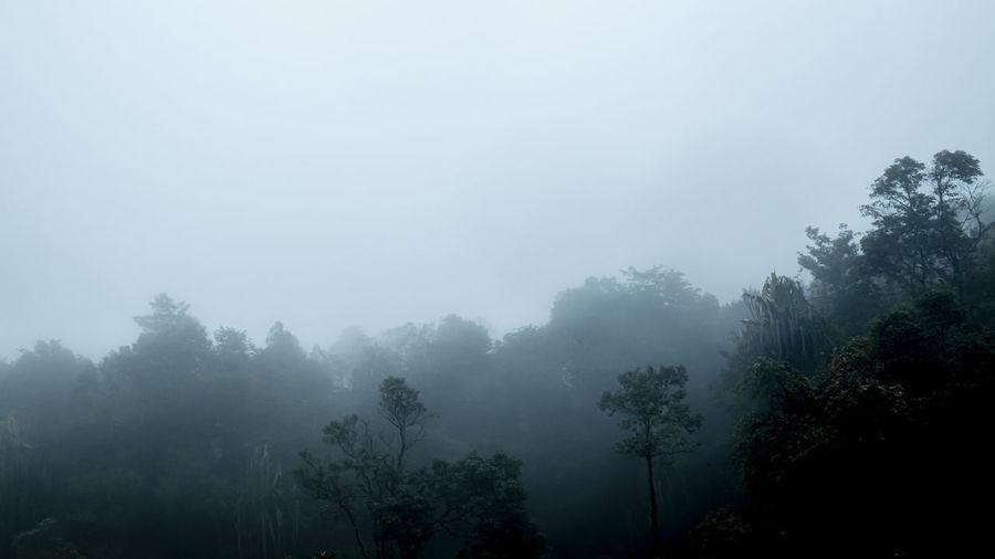 Tree Fog Plant