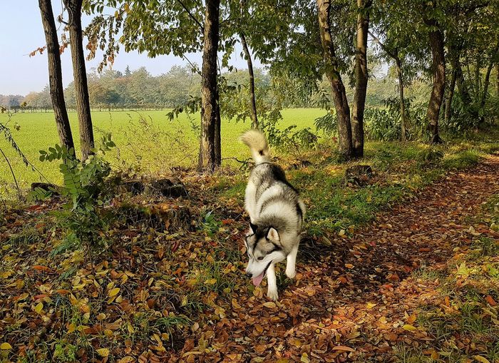 Colours Of Autumn Animals In The Wild Dogs Husky My Dog Waiting Game