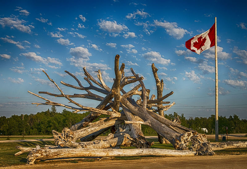 Architecture Canadian Flag Canadian Flag Whipping In The Wind Drift Wood  Nature Art Beauty In Nature Blue Sky Cloud - Sky Day Explore Manitoba Flag Landscape Nature No People Outdoors Scenics Sculpture Sky Sunset Tranquil Scene Tranquility Tree Tree Trunk