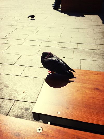 Hanging out with a pigeon while waiting for my train to berlin. She seems to like cappuccino. Good girl.