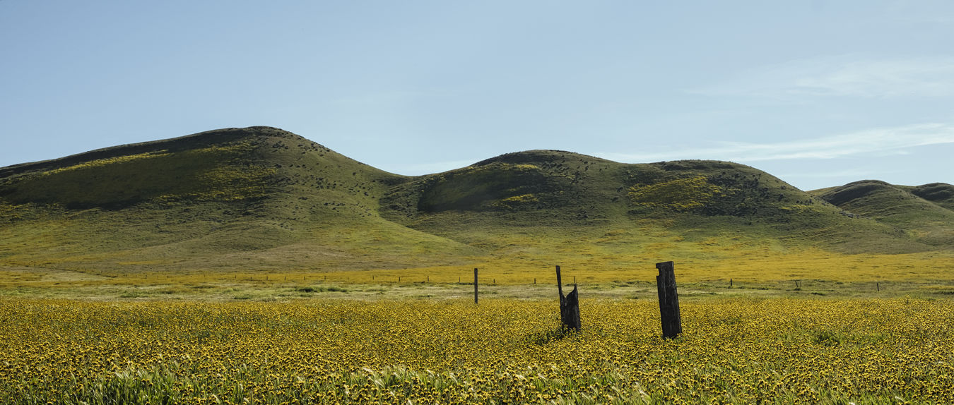 California grassland. Beauty In Nature Day Field Grass Landscape Mountain Nature No People Outdoors Scenics Sky Tranquil Scene Tranquility