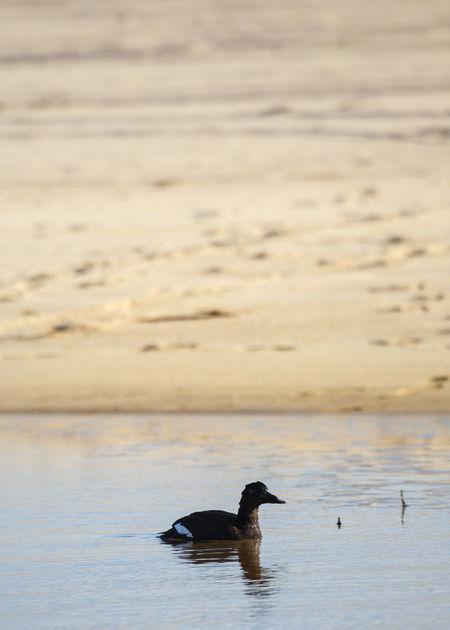 Gradient Martha's Vineyard Beach Duck Marthasvineyard Sand Tidal Pool Water