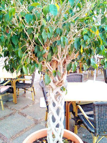 Tree Nature Latinoamerica