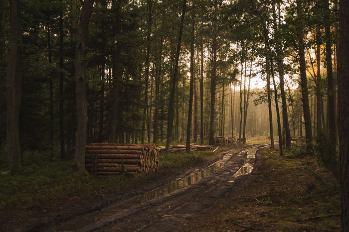 Beauty In Nature Empty Road Forest Freedom Growth Holiday Nature Non-urban Scene Outdoors Peaceful Poland Sunset Tree Trees Vacations Wilde WoodLand First Eyeem Photo