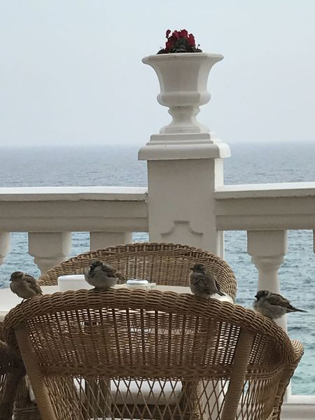 relaxing sparrows ... Hotel Nixe Palace, Mallorca An Eye For Travel Bird Photography Birds Of EyeEm  Mallorca Mediterranean  Red Animal Themes Basket Beauty In Nature Bird Birds_collection Clear Sky Close-up Day Furniture Horizon Over Water Nature No People Outdoors Rattan Chair Scenics Sea Sky Sparrows Water