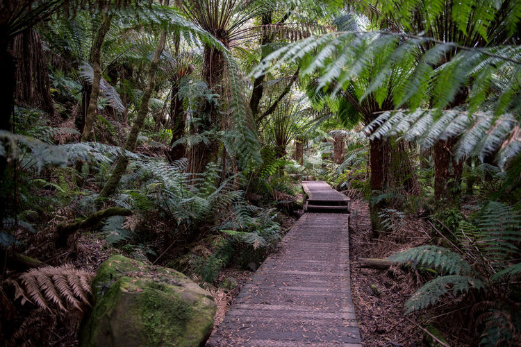 Jungle Rainforest Australia Nature Forest Wildlife Wild Victoria Plant Direction The Way Forward Growth Palm Tree Footpath Tree Beauty In Nature No People Tropical Climate Tranquility Green Color Land Day Outdoors Tranquil Scene Lush Foliage Foliage Garden Path