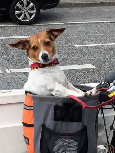 Dog Transportation Dogs Mobile Animal Themes Day Dog Dog In The Basket Domestic Animals Mammal No People One Animal Outdoors Pets Sitting Transportation