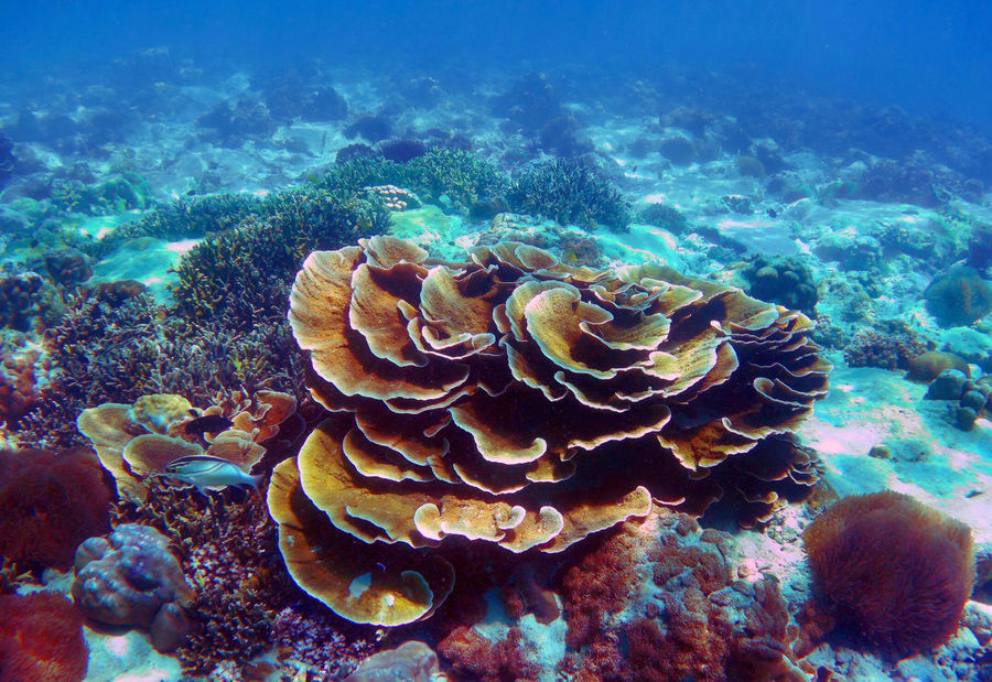 Beautiful Coral reef in Andaman sea ,Nyaung Oo Phee island , Myanmar Beautiful Scuba Diving Travel Andaman Sea Animal Themes Animals In The Wild Beauty In Nature Coral Coral Reef Day Myanmar Nature No People Nyaung Oo Phee Island Ocean Outdoors Sea Sea Life UnderSea Underwater underwater photography Water