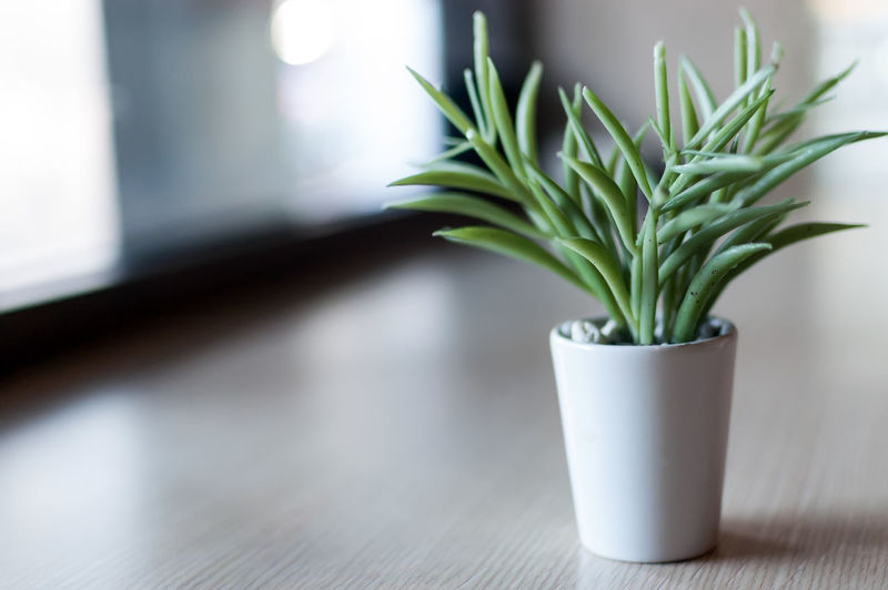 Fake Plant Decoration - Artificial House Plant - Fake Plant Decor Indoors  Table Plant Potted Plant No People Nature Day Growth Green Color Close-up Focus On Foreground Wood - Material Houseplant Window Freshness Food And Drink Selective Focus Flooring Flower Pot Small Planting