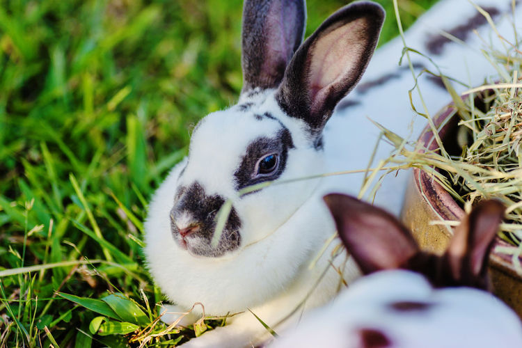 Close-up of rabbits by straw on field