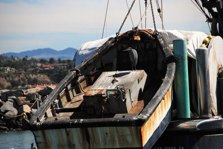 Bird Boat Boat Being Towed Building Exterior Built Structure Day Egret Nature No People Outdoors Rotting Wood Sky Wood