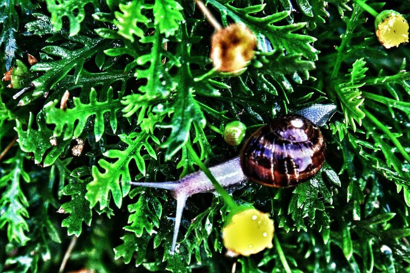Summer kick back slow down have fun Enjoying Life Special Effects Share A Photograph Share Your Gift Share Your Love Life Is A Journey The Great Outdoors - 2016 EyeEm Awards The Essence Of Summer Time Out SlowDown Snail Photography Snails Pace