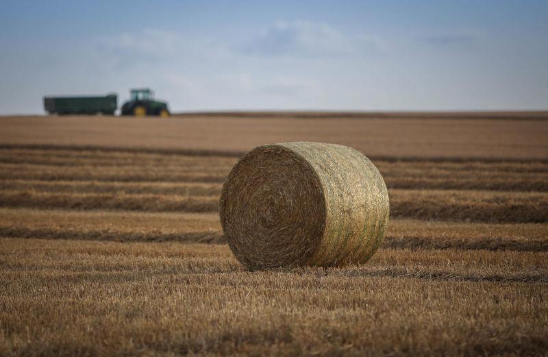 Harvest Time 5dMarkⅡ 70-200mm Agriculture Bales Bales Of Hay  Canon Focus On Foreground Harvest Harvest Time Harvesting Kent Landscape Tractor