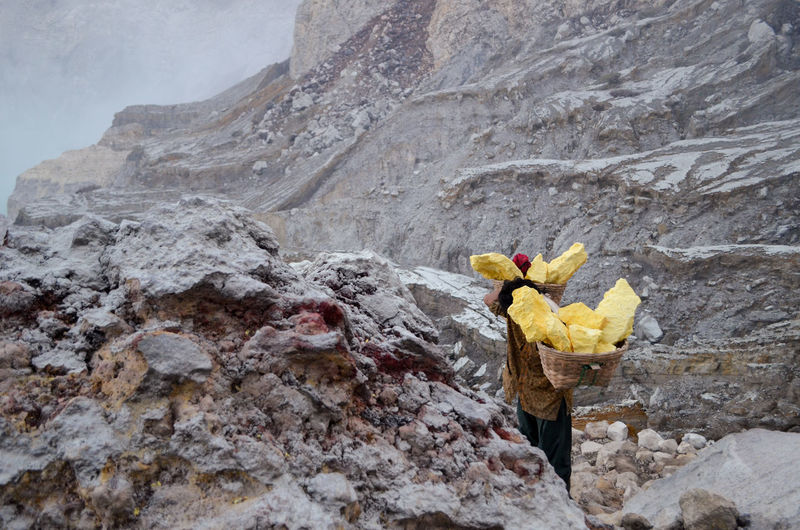 Ijen Crater INDONESIA Indonesian Asian  People Working Work EyeEm Selects EyeEmNewHere EyeEm Best Shots Bestoftheday Nature Day Yellow Flower Flowering Plant Land Beauty In Nature One Person Outdoors Livestock Real People Men Solid Plant Domestic Animals Sand Bouquet