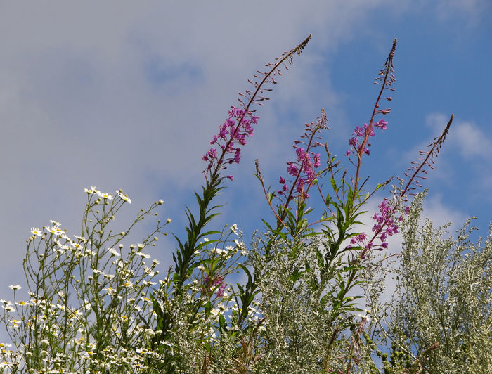 Low angle view of flowering plants on field against sky