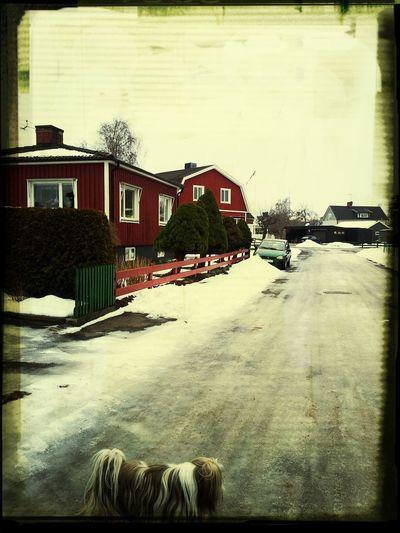 doggiewalk!!