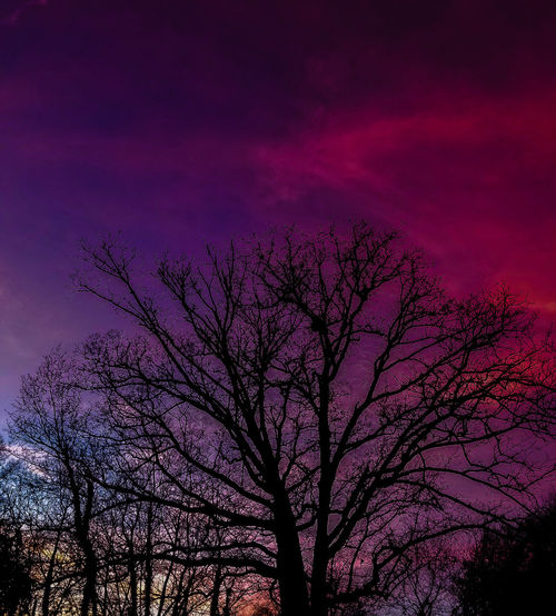 Low angle view of silhouette bare tree against romantic sky