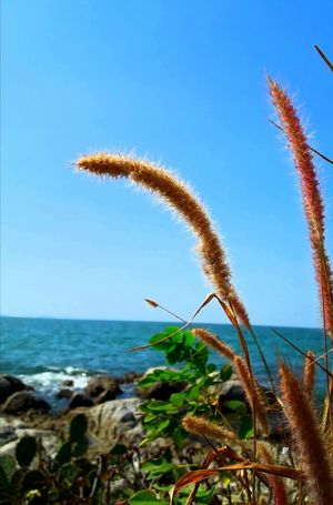sea Plant Sky Beauty In Nature ❤️❤️ Thailand🇹🇭 2018 Day UnderSea Clear Sky Water Sea Life Beach Blue Horizon Over Water Close-up EyeEmNewHere