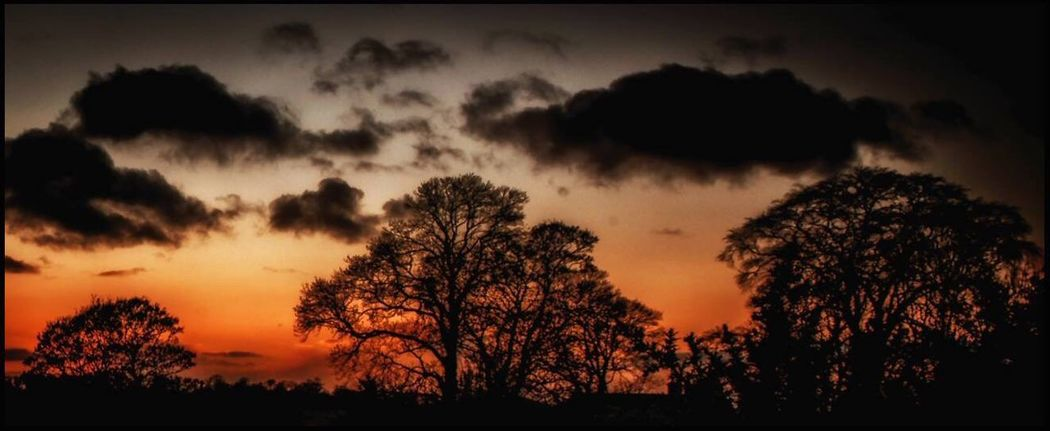 Irish Sunset Sunset Silhouette Nature Beauty In Nature Tree Tranquility Sky
