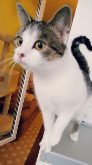 Pets One Animal Domestic Animals Indoors  Sitting Animal Themes
