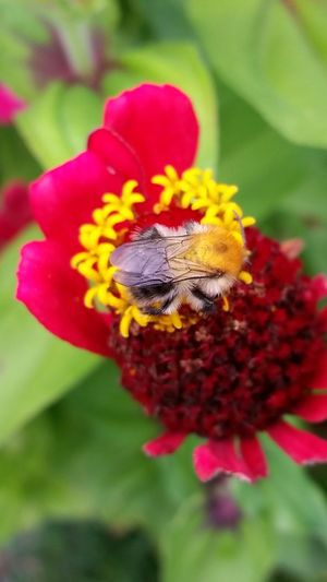 Enjoying Life Flowers_collection Flowers Flowers And Insects Summer Macro Nature Get Close Summer Macro Nature