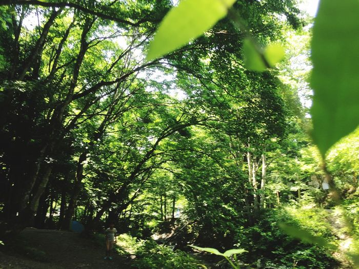 Growth Tree Nature Forest No People Day Branch Outdoors Foliage Beauty In Nature 緑の中