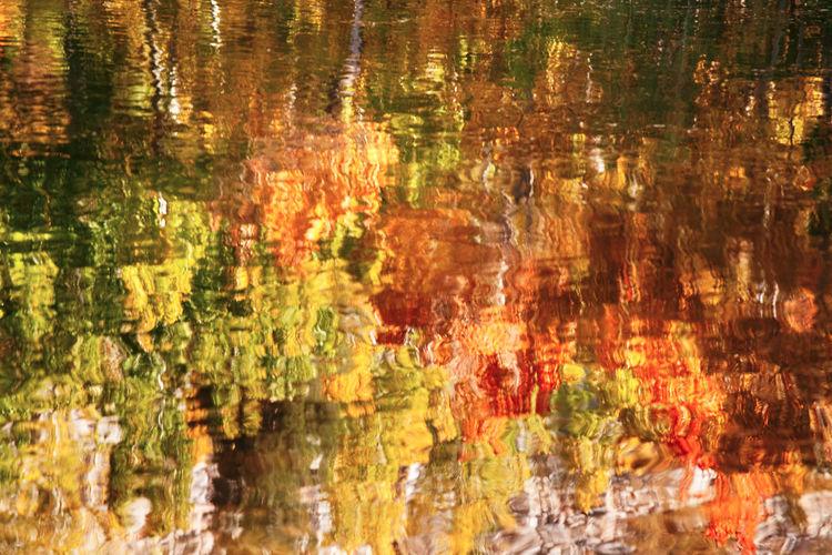 Full frame shot of reflection of trees in lake