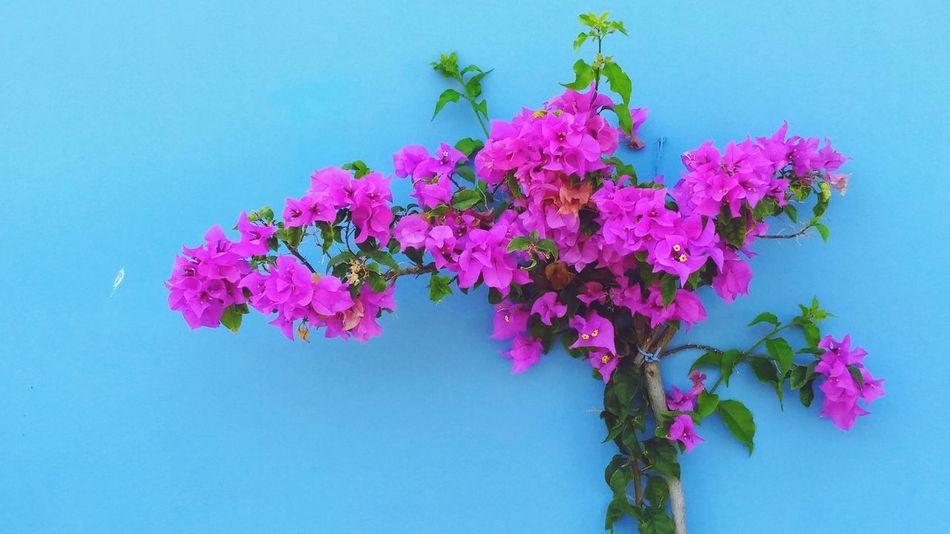 Mexicano sabe explorar muito bem as cores! Me encanta! Mexico Puerto Morelos Nofilter Eyeemgallery Hello World Traveling Mexicolors