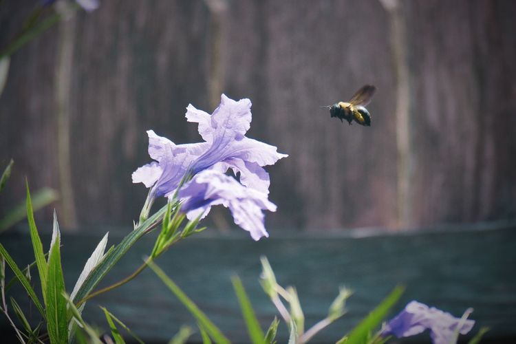 Close-up of bee flying over flower