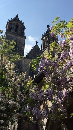 Spring at the Dom ☀🌺 Dom Magdeburg Architecture Architecture_collection Tree Flower Sky Architecture Building Exterior Old Town Historic