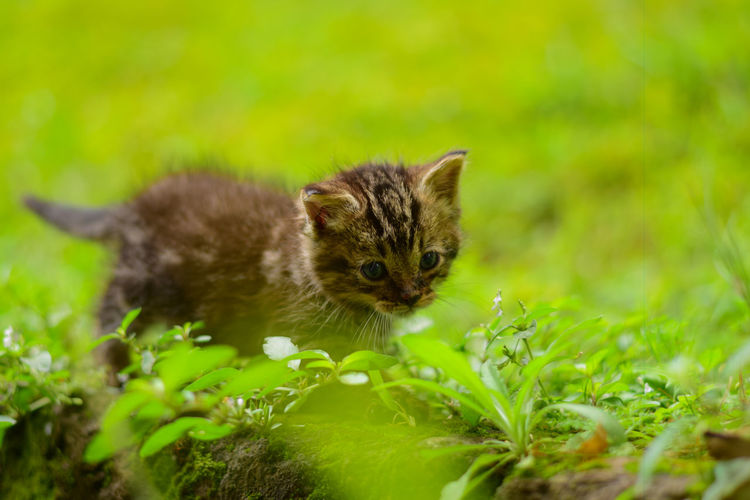 Cats Of EyeEm EyeEm Best Shots Animal Animal Themes Animal Wildlife Animals In The Wild Cute Day Grass Green Color Kitten Kittenoftheday Kittens Of Eyeem Land Looking At Camera Mammal Nature No People One Animal Outdoors Plant Portrait Rodent Selective Focus Vertebrate
