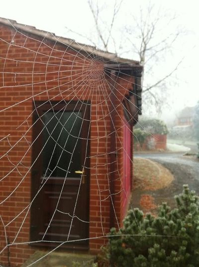 The Icey Web