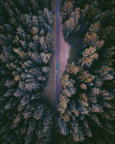 Nature Outdoors Tree Beauty In Nature Jeep No People Moody Jeep Wrangler  Dronephotography Drone  Tree Australia Day Travel Destinations Vacations Moody Nature Pathway Growth Full Frame EyeEm Selects Top Down View