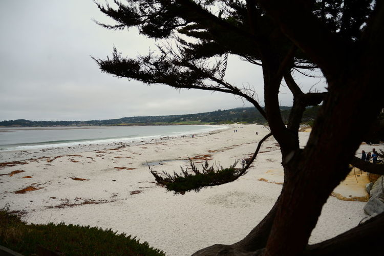 Beach Beauty In Nature Branch Coastline Day Horizon Over Water Landscape Nature No People Outdoors Sand Scenics Sea Single Tree Tree Vacations Water