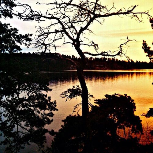 Lake Tree Beautiful