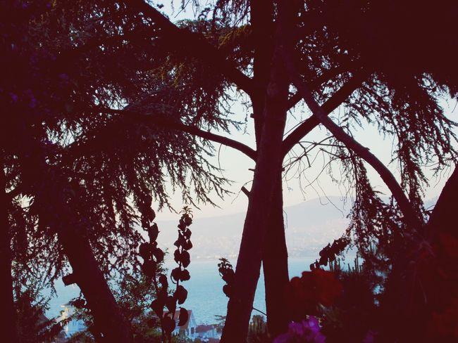 Sunset Silhouettes Büyükada Prinkipo Princeislands