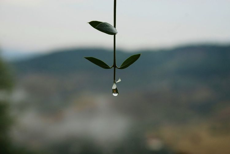 Balance Drops Mountains Horizon Sun Summer Rain Landscape Hills Macro Olive Olive Tree Green Plant Close-up Hanging Water Drop Mid-air Close-up Fragility Splashing Droplet Dripping
