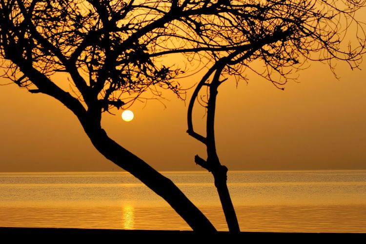 Beach Beauty In Nature Branch Day Horizon Over Water Khobar Corniche Kobar Lighting Technique Luminosity Nature No People Outdoors Reflection Refraction Scenics Sea Seascape Silhouette Sky Sun Sunset Tranquil Scene Tranquility Tree Water