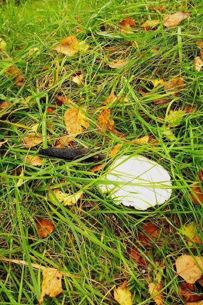 Fungus 🍄 And The Slug Huawei P9 Leica Wales❤