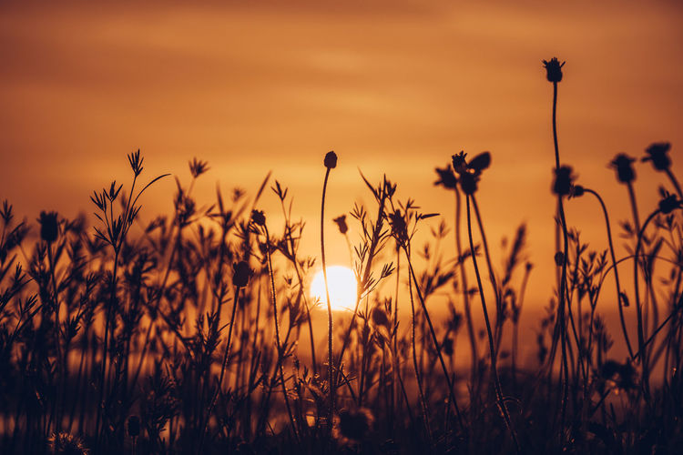 Silhouette plants growing on field against romantic sky at sunset