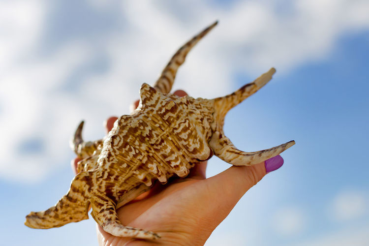 Close-up of a hand holding dried