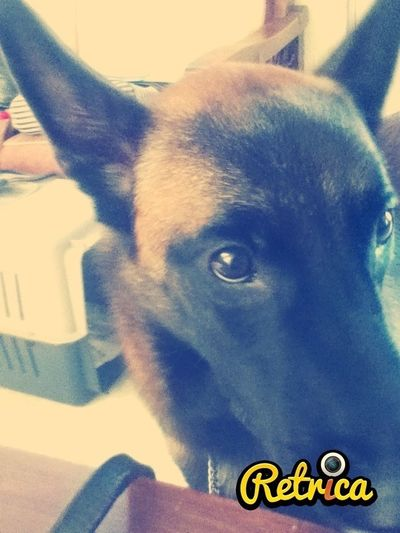 Dogs <3  Káiser :)