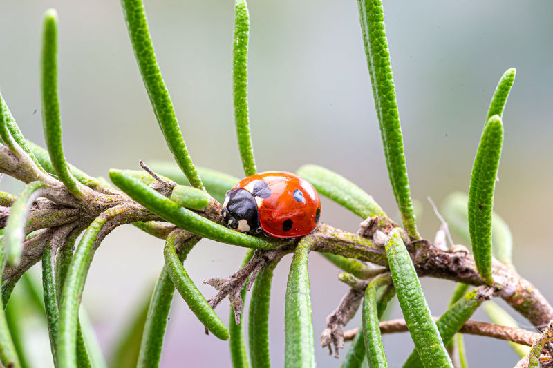 Close-up of ladybug on plant