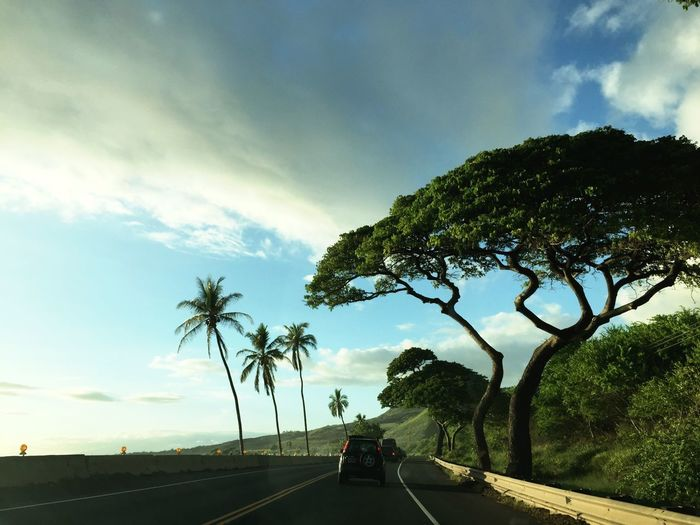 Hawaii Sky Tree Cloud - Sky Plant Transportation Road Nature Street Outdoors Growth Land Vehicle The Way Forward City Lifestyles Mode Of Transportation Direction Real People Motor Vehicle Palm Tree Car