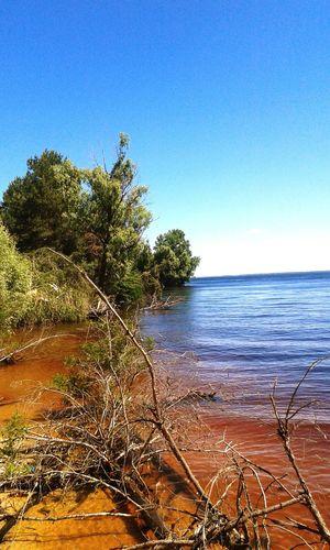 Sukholuch'ye Lake Lake View Trees Kiev Sea Fir Tree Reservoir Ukraine