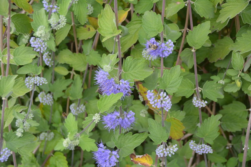 Beauty In Nature Botany Bunch Of Flowers Close-up Day Flower Flower Head Flowering Plant Fragility Freshness Green Color Growth High Angle View Inflorescence Leaf Nature No People Outdoors Petal Plant Plant Part Purple Vulnerability