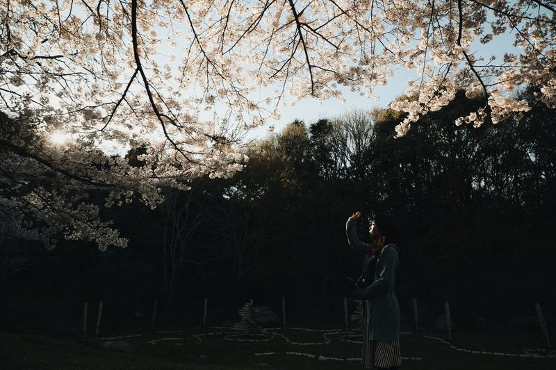 Woman standing by trees in park