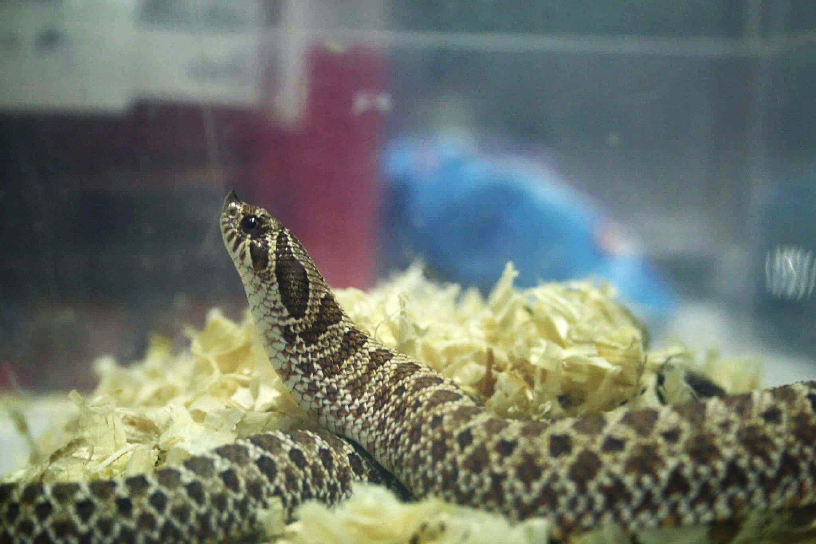 animal themes, one animal, animals in the wild, wildlife, close-up, focus on foreground, selective focus, reptile, insect, nature, indoors, animal wildlife, underwater, animals in captivity, sea life, no people, lizard, zoology, day