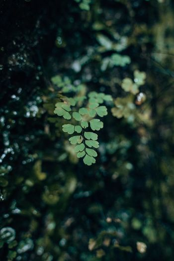 High angle view of leaves on tree in forest