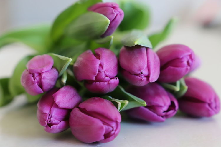Tulips Beauty In Nature Blossoming  Bouquet Bouquet Of Flowers Bunch Of Flowers Close-up Flower Flower Arrangement Flower Head Flower Heads Flowering Plant Freshness Giftcard Greeting Card  Petal Petals Pink Color Purple Flower Purple Flowers Screensaver Still Life Tulip Tulip Head Tuliphead